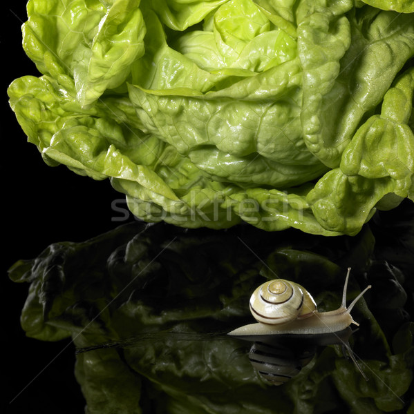 yellow Grove snail and salad Stock photo © prill
