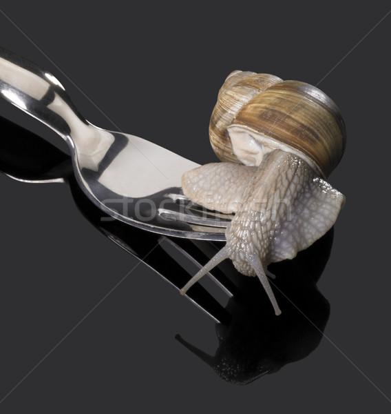 Winorośl ślimak widelec studio fotografii ciemne Zdjęcia stock © prill