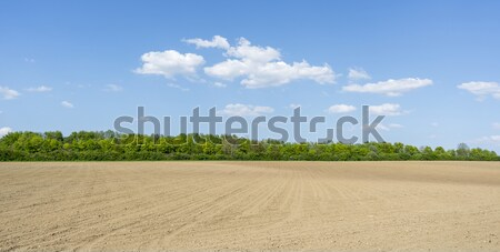 Ensolarado agrícola cenário campo distrito Foto stock © prill