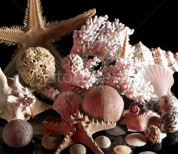 sea life decoration Stock photo © prill