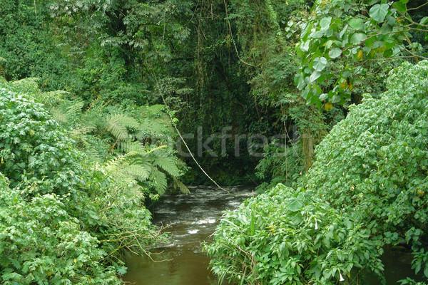 Floresta Uganda vegetação dentro África água Foto stock © prill