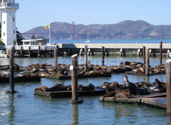 harbor with Sea Lions in San Francisco Stock photo © prill