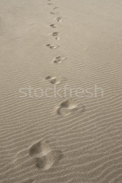 Stockfoto: Lopen · alleen · symbolisch · eenzaam · voetafdrukken · drogen