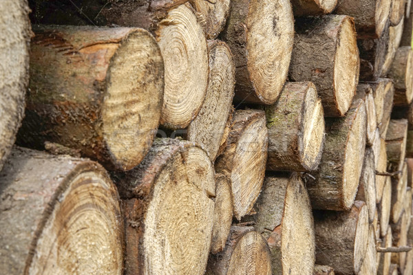 stacked tree trunks Stock photo © prill