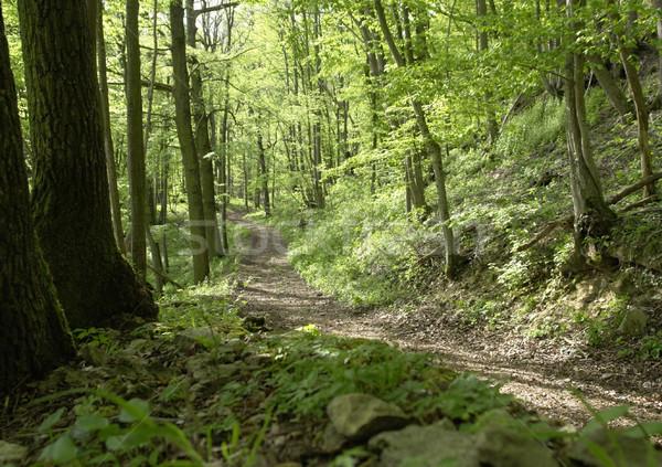 森林 トラック 国連 晴れた のどかな 穏やかな ストックフォト © prill