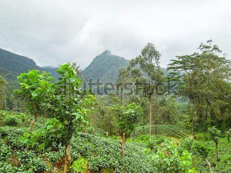 Hegy díszlet Sri Lanka fa természet felhő Stock fotó © prill