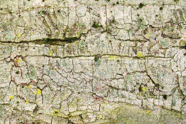 抽象的な 樹皮 クローズアップ フルフレーム 詳細 ショット ストックフォト © prill