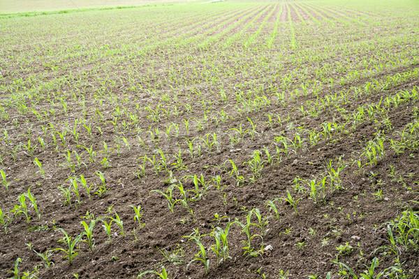 sunny farmland scenery Stock photo © prill