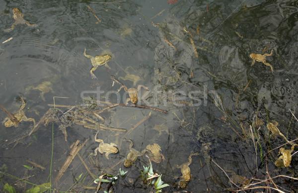 池 水 自然 肖像 湖 動物 ストックフォト © prill