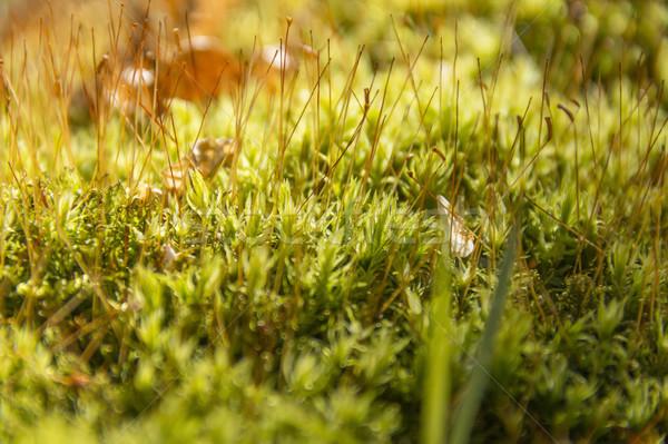 Yosun tam kare yeşil orman bitki Stok fotoğraf © prill