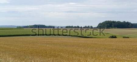 rural pictorial agriculture scenery at summer time Stock photo © prill