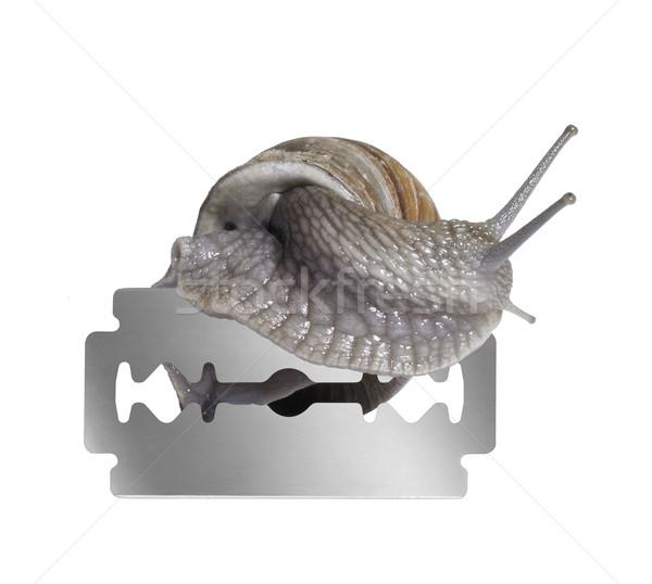 Grapevine snail and razor blade Stock photo © prill