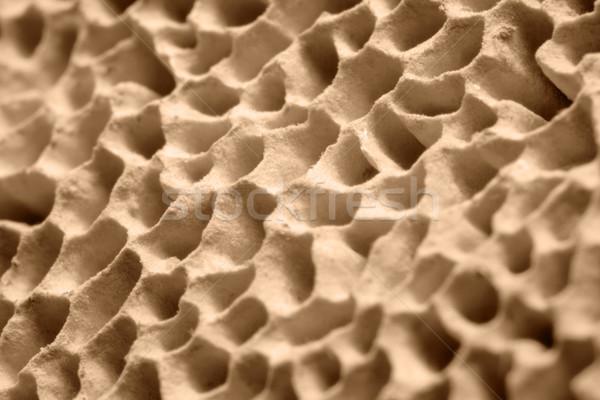 mushroom pores Stock photo © prill