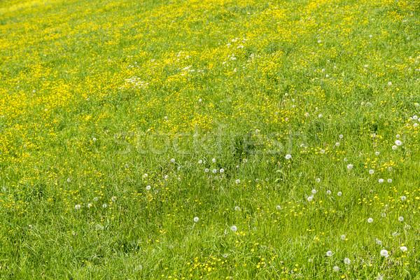луговой весна полный кадр подробность цветок цветы Сток-фото © prill