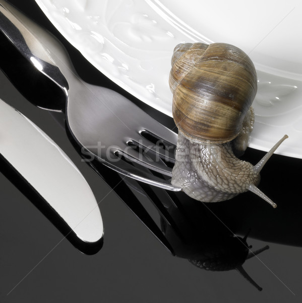 grapevine snail creeping on dinnerware Stock photo © prill