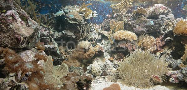 Korallzátony vízalatti díszlet mutat színes részlet Stock fotó © prill