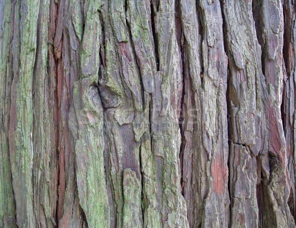 bark detail Stock photo © prill
