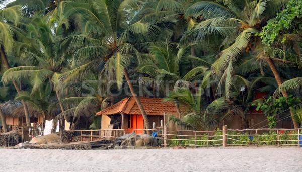 Сток-фото: пляж · декораций · Гоа · Индия · завода · пальма