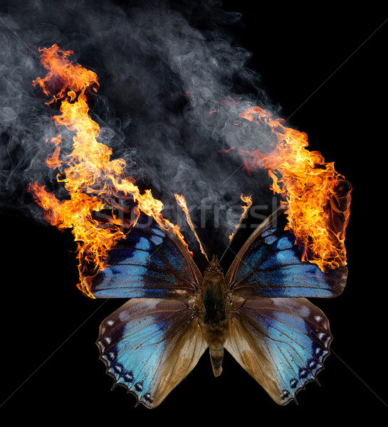 burning butterfly Stock photo © prill