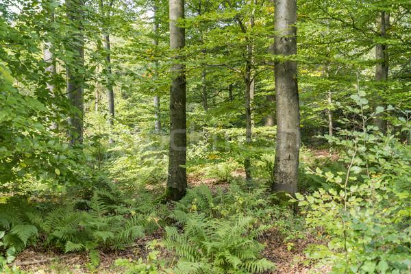 Photo stock: Idyllique · forêt · paysages · ensoleillée · sol