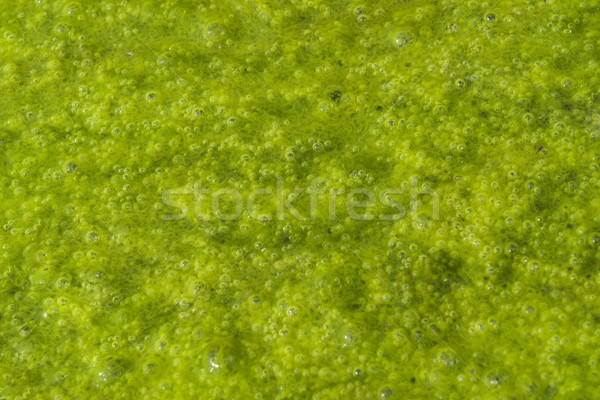 green slime with small bubbles Stock photo © prill