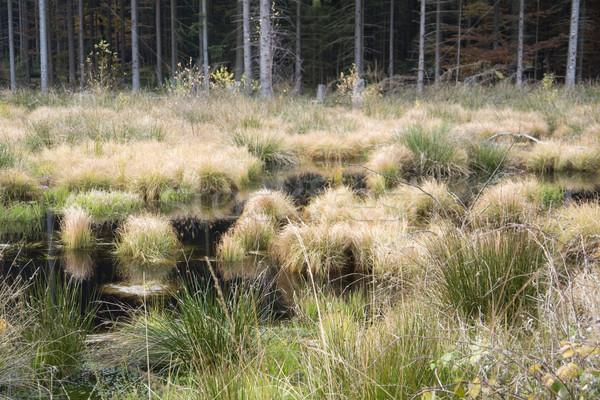Stock photo: swampland