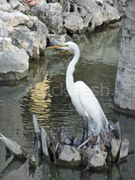water and egret Stock photo © prill