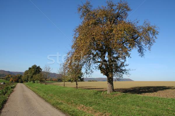 autumn scenery Stock photo © prill