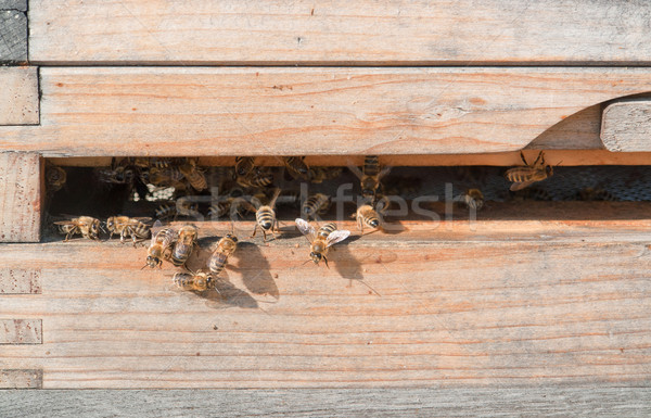 Bijenkorf entree houten zonnige hout insect Stockfoto © prill