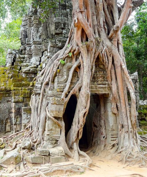 Tapınak angkor detay Kamboçya ağaç seyahat Stok fotoğraf © prill