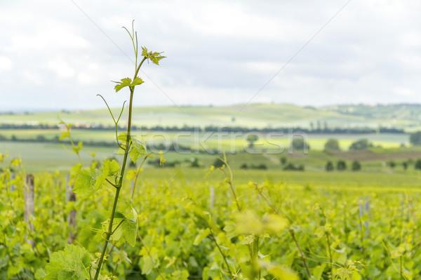 winegrowing around Loerzweiler Stock photo © prill