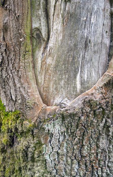 Detalle fotograma completo árbol madera resumen Foto stock © prill
