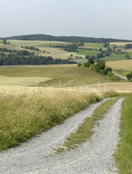 rural panoramic scenery with farm track Stock photo © prill