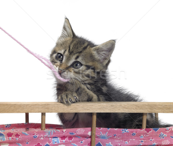 kitten and pink wool Stock photo © prill