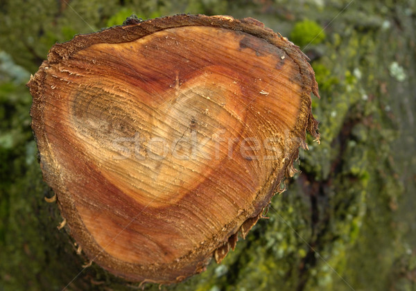 wooden heart shape Stock photo © prill