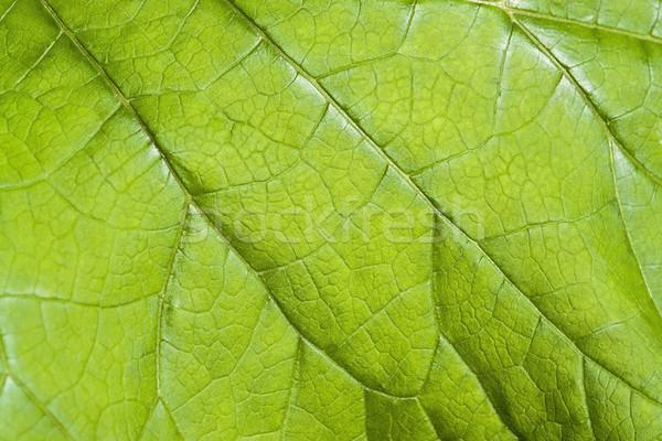 Foglia verde dettaglio full frame fresche natura foglia Foto d'archivio © prill