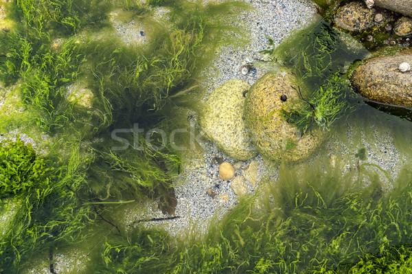 overgrown coastal detail Stock photo © prill