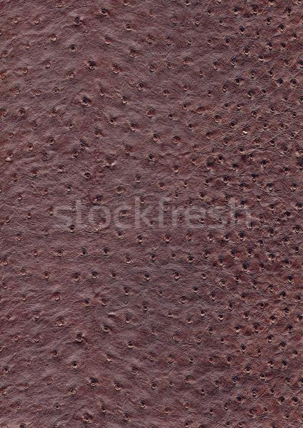 ダチョウ 革 表面 フルフレーム 抽象的な ブラウン ストックフォト © prill