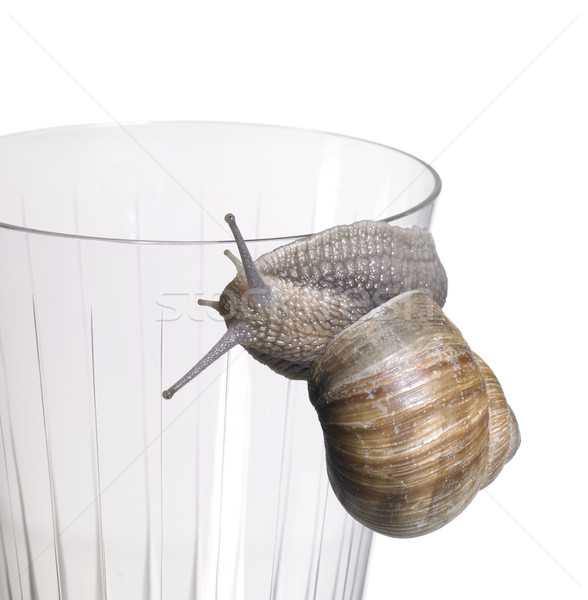 grapevine snail on drinking glass Stock photo © prill