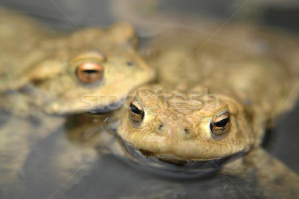 Ritratto dettaglio due guardando superficie dell'acqua acqua Foto d'archivio © prill