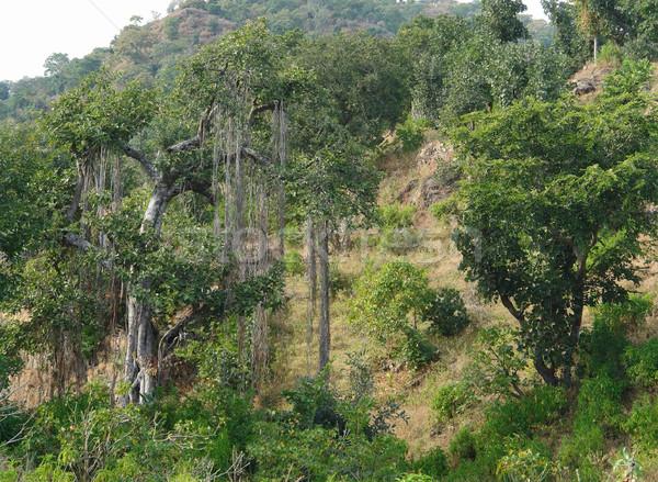 Autour gamme paysages arbre bois nature Photo stock © prill