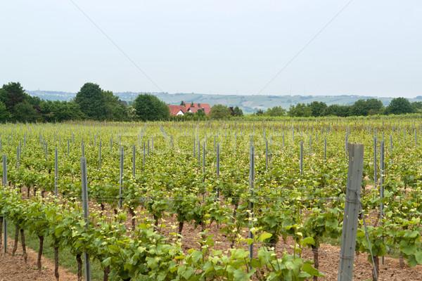 Rheinhessen Stock photo © prill