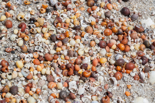 lots of sea snail shells Stock photo © prill
