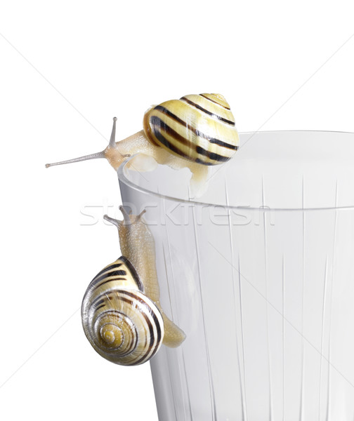 Grove snails on a drinking glass Stock photo © prill