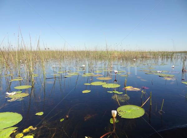 Delta díszlet Botswana Afrika víz fű Stock fotó © prill
