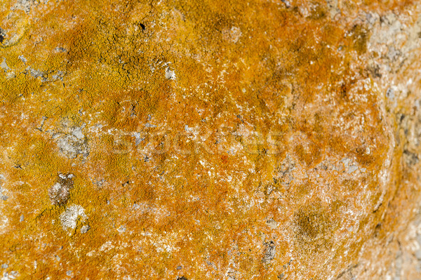 overgrown abstract rock surface Stock photo © prill