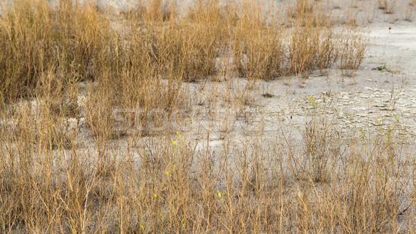 arid environment Stock photo © prill