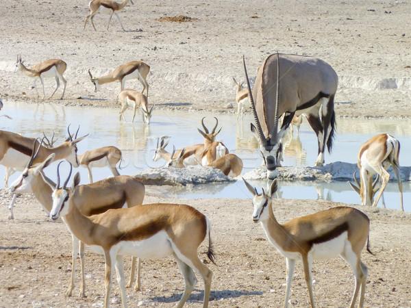 различный Намибия Солнечный декораций группа Африка Сток-фото © prill