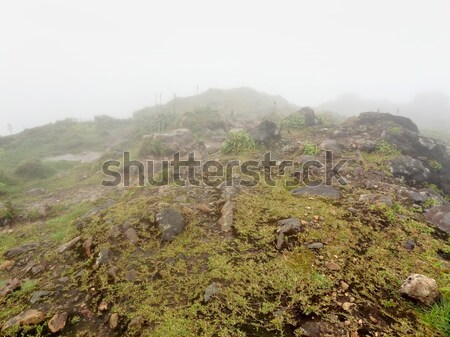 foggy mountain top Stock photo © prill