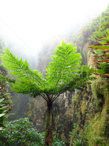Egzotik bitki örtüsü puslu manzara caribbean ada Stok fotoğraf © prill